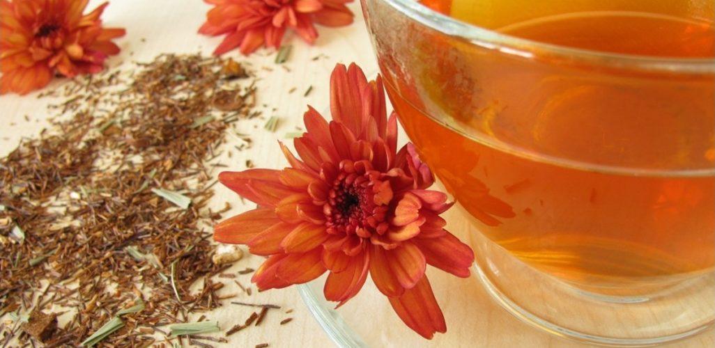 Beneficios para la salud del té Rooibos