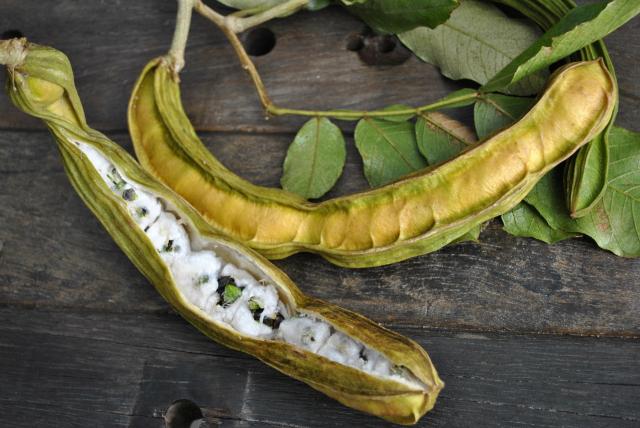 Beneficios para la salud de las frutas de frijol de helado