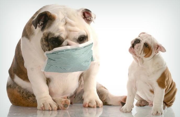 Cosas que debe saber sobre la tos de la perrera