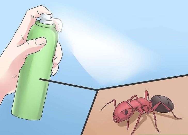 Cómo deshacerse de las hormigas naturalmente