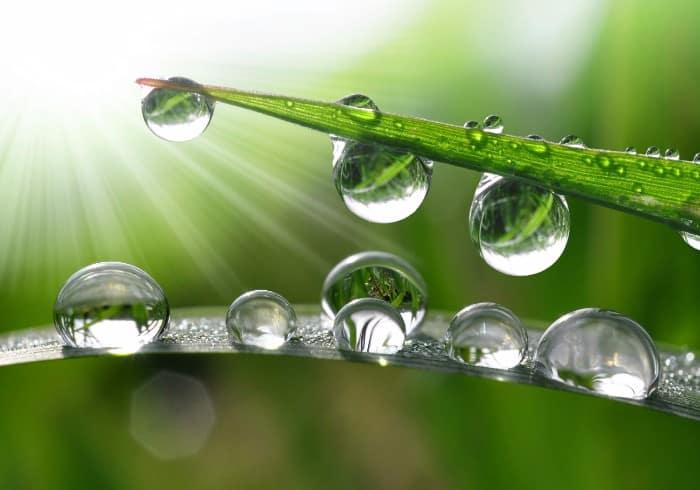 Rocío de gotas de hojas de hierba